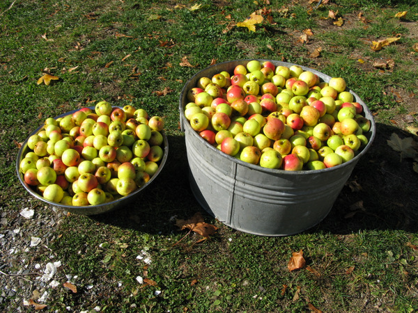 Cider Pressing & Open House